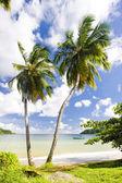 Batteaux Bay, Tobago — Stock Photo
