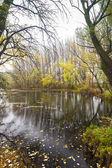 Small Danube river in autumn — Stock Photo