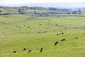Landscape near Hadrian's wall — Stock Photo