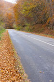 Empty road in autumn, Slovakia — Foto Stock