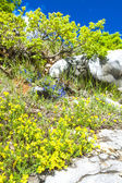 Spring vegetation in Verdon, Provence, France — Stock Photo