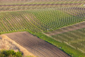 Vineyards from near Velke Bilovice — Stock Photo