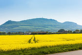 Palava with rape field, Czech Republic — Stock Photo