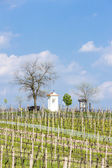 Spring vineyards near Nemcicky — Stock Photo