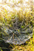 Spider web on meadow — Stock fotografie