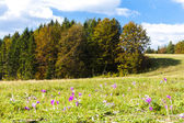 Meadow in blossom, Nizke Tatry (Low Tatras), Slovakia — Stock Photo