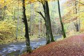 Rzeki metuji w jesieni — Zdjęcie stockowe