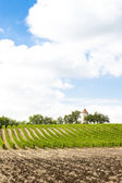 Vineyard with windmill near Ribagnac — Stock Photo