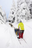 Dog sledding trip — Stock Photo