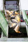 Gölet hasat — Stok fotoğraf