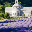 Senanque abbey with lavender field, Provence, France — Stock Photo #9703859