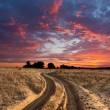 Path in steppe on sunset — Stock Photo