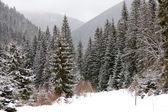Winter in den bergen — Stockfoto