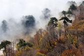 Foggy forest in mountains — Zdjęcie stockowe