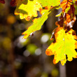 Autumn leafage — Stockfoto #13883357