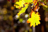 Autumn leafage — Foto Stock