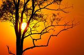 Tree on sunset — Stock Photo