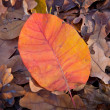 Foto Stock: Autumn leafage