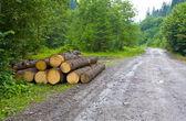 Wooden beam store — Stock Photo