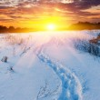 Snow-path in steppe on sunset background — Stock Photo