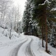 Road turn in winter forest — Stock Photo