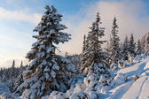 Nice scene in winter nountains — Стоковое фото