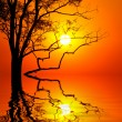 Tree on sunset background - Stock Photo