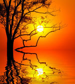 Tree on sunset background — Fotografia Stock