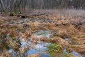 Ormanda bataklık — Stok fotoğraf