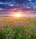 Atardecer en el prado — Foto de Stock