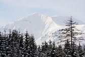 Mountain scene in winter time — Foto de Stock