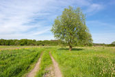 Rural road on meadow — Stock Photo