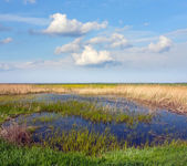 Bog in steppe — Stock Photo