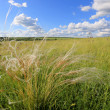 Summer scene in steppe - Stock Photo