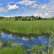 Bog in steppe - Stock Photo