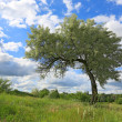 Alone tree on meadow - Stock Photo