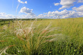 Summer scene in steppe — Stock Photo