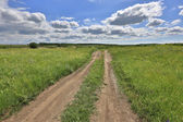 Nice scene in steppe — Foto Stock