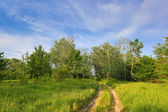 Rut road in forest — Stock Photo