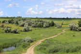 Rut road on green meadow — Stock Photo