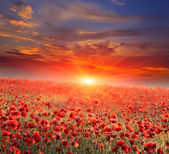 Poppy field on sunset — Stock Photo
