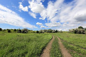 Rural road in steppe — Stock Photo
