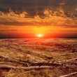 Sunset over dead forest — Stock Photo