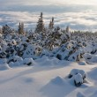 Snowy forest in mountains — Stock Photo #28896861
