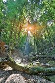 Matin dans la forêt — Photo