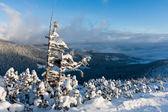 Frozen tree in mountains — Stock Photo