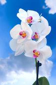 Orhid flower — Stock Photo
