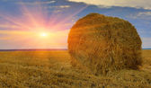 Hay-roll on meadow against sunset background — Stock Photo