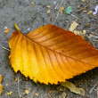 Autum leaf — Stock Photo