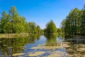 Summer on bog — Stock Photo